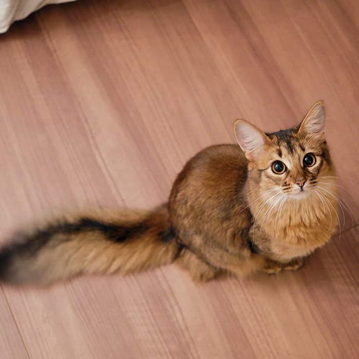 Кошка Люсина прикидывается белкой