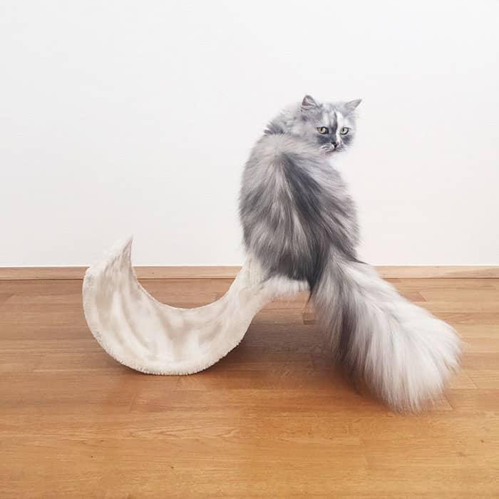Мировая красавица среди кошек