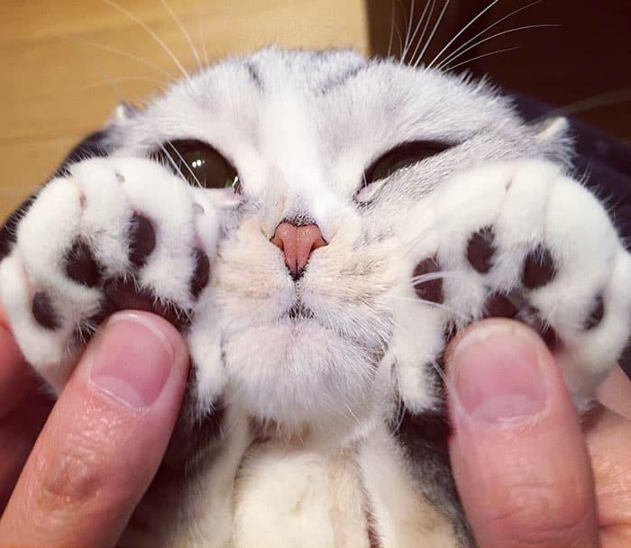 кошка Ханна