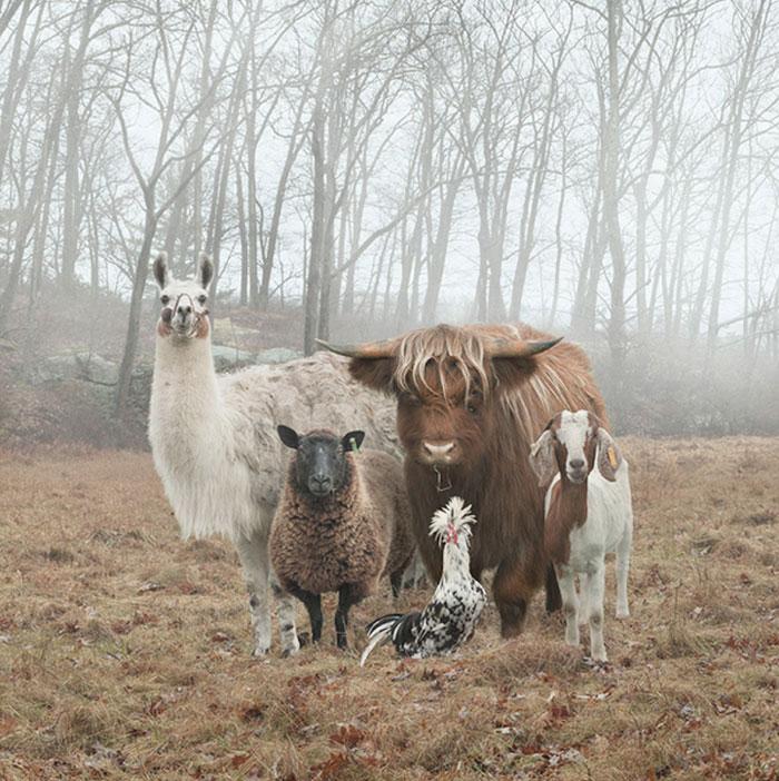 Местная бригада животных