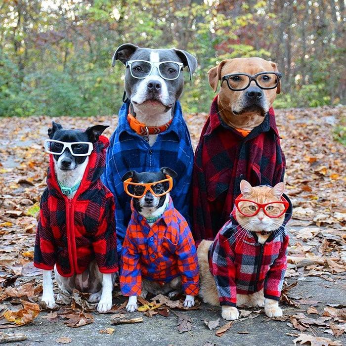 Семья собак