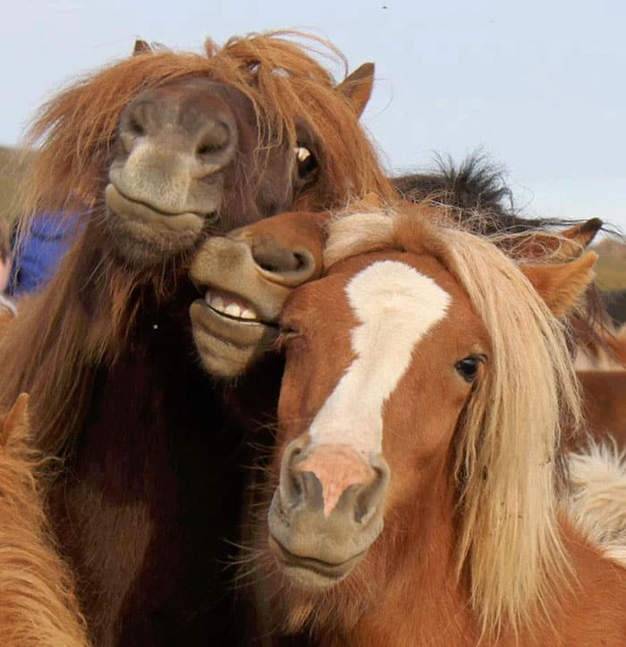 Лошадиные морды