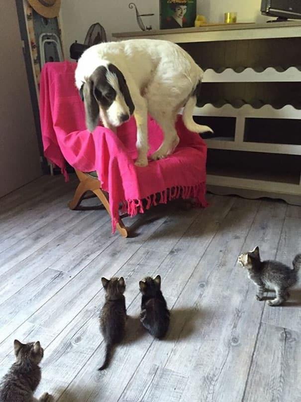 Ужасная встреча с котятами