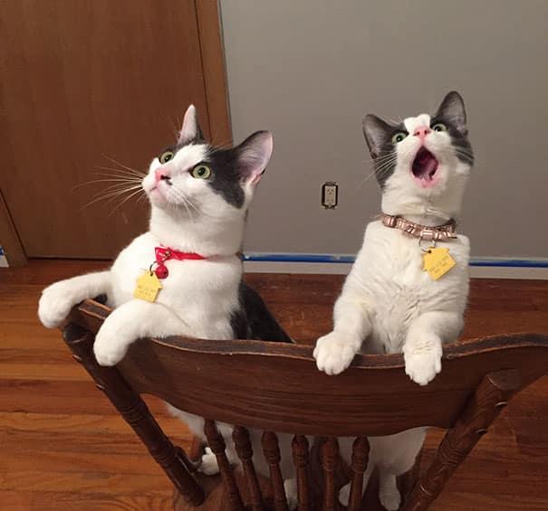 Удивление кошки