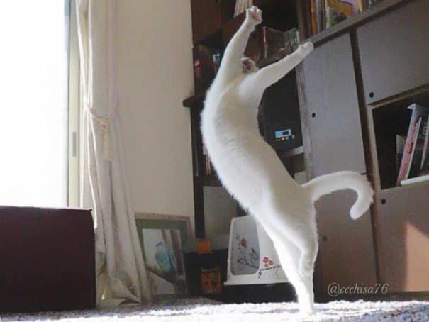 Кошка - балерина
