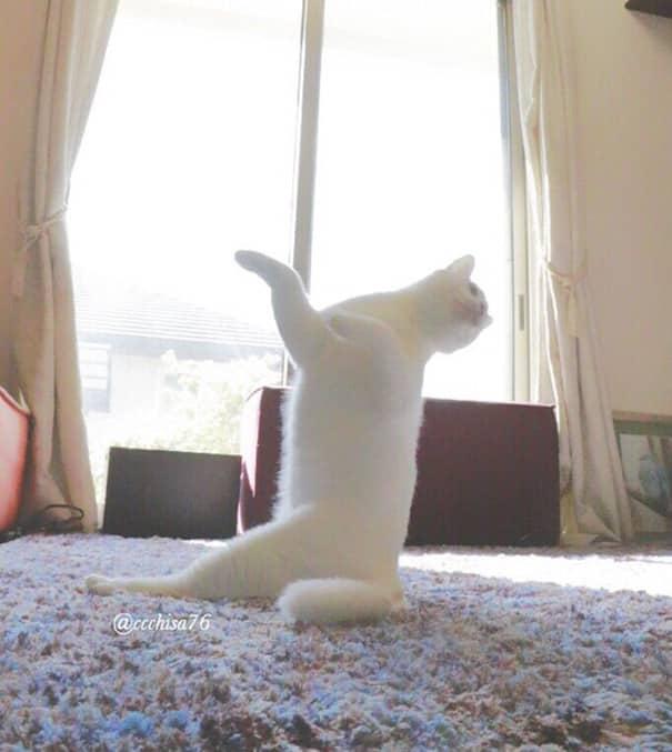 Балетная подготовка у кошки