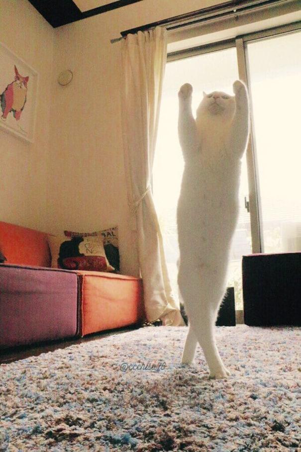 Танец кота на постели