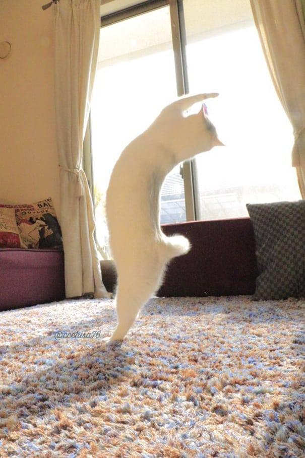 Виртуозный танец кошки
