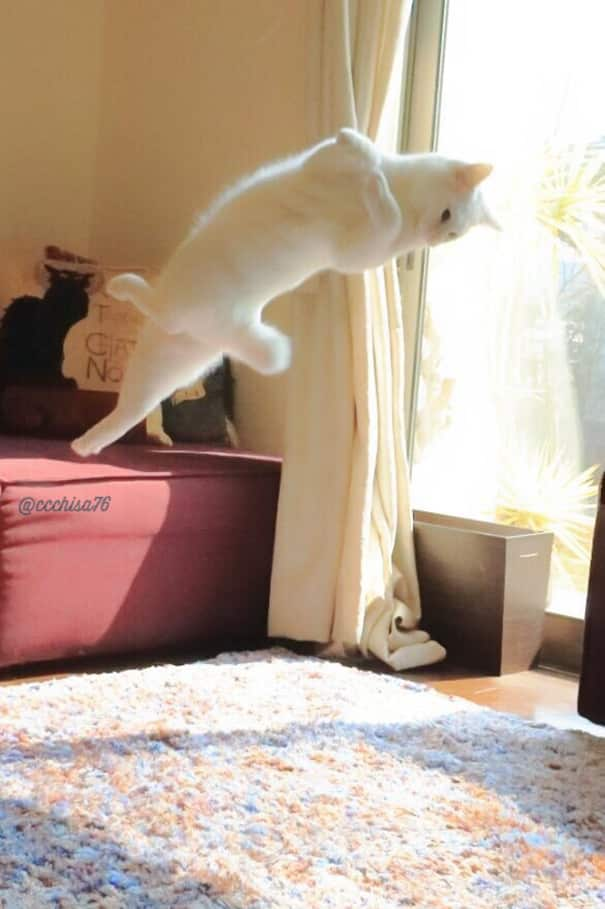 Пируэт кошки