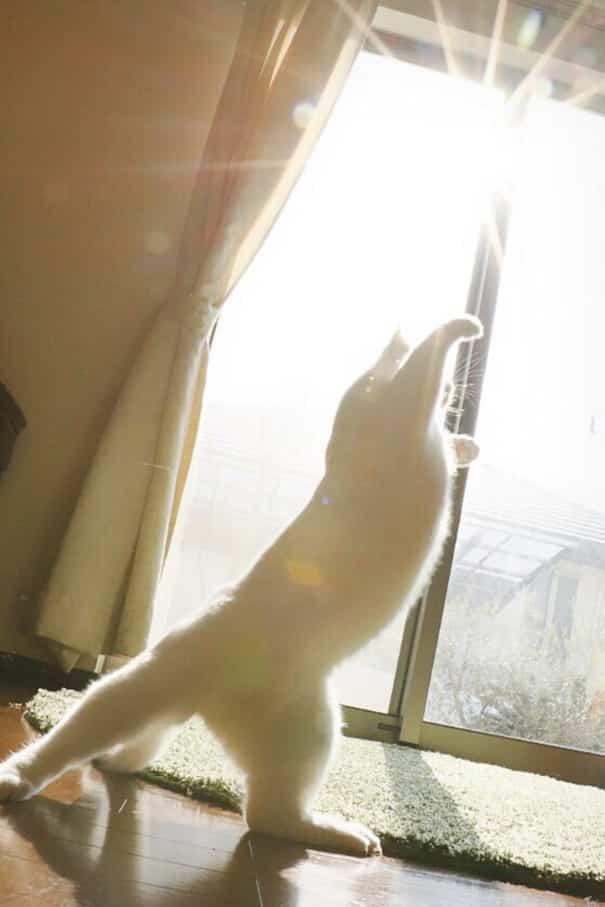 Скрытое поведение домашней кошки