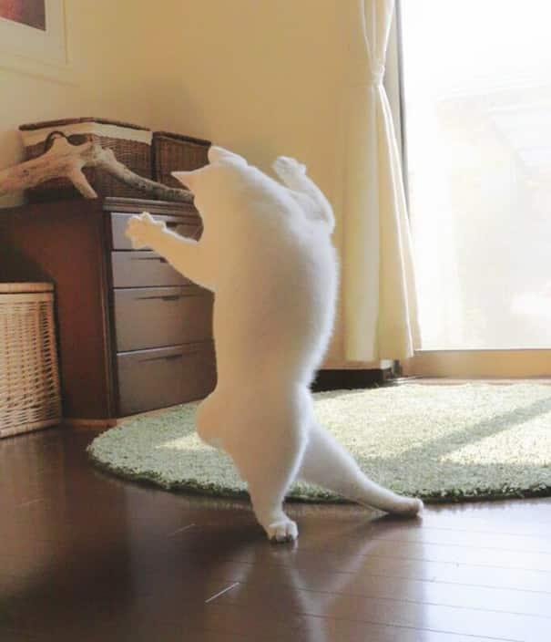 Кошачий танец одиночества