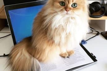 Красивая Кошка Смузи