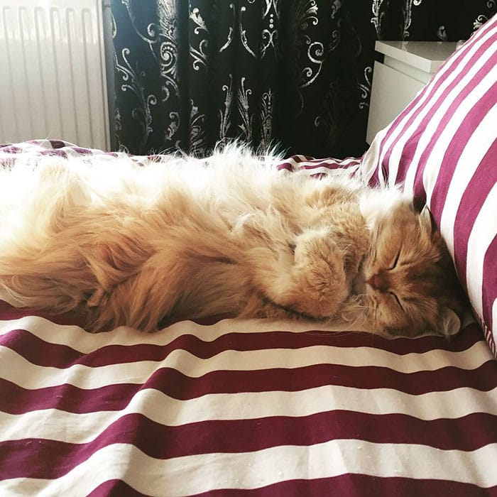 Кошка Смузи - любимица Интернета