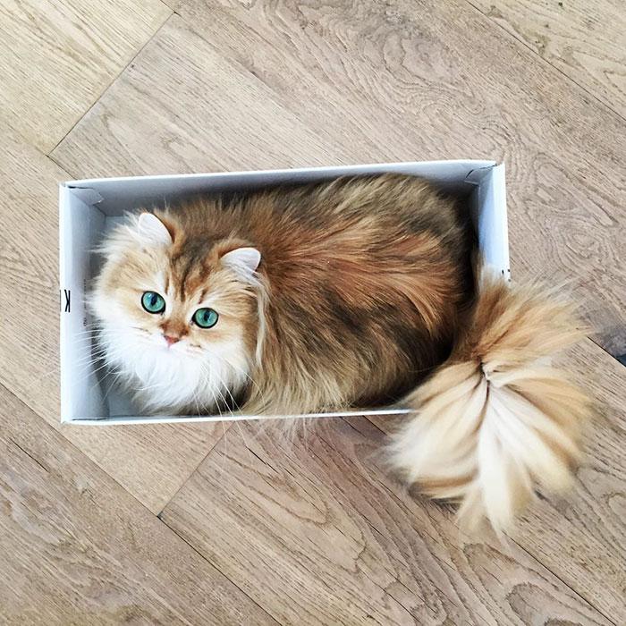 Кошка Смузи покоряет сердца