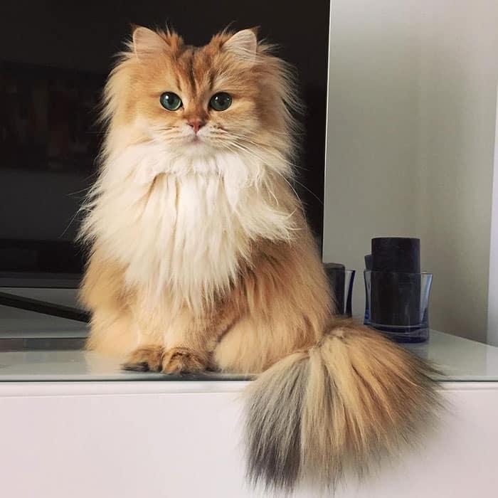 Самая красивая Кошка Смузи