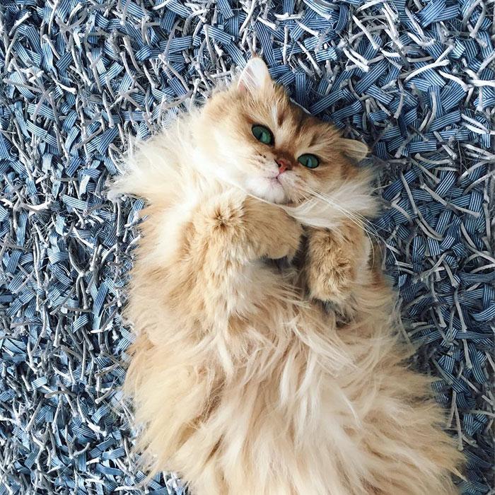 Фотогеничная Кошка Смузи