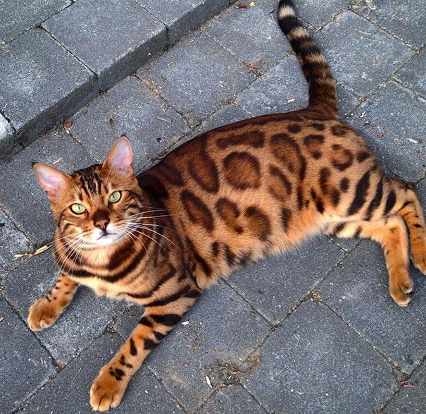 Кот с магическим взглядом