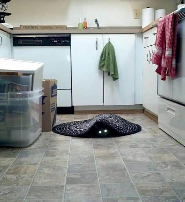 Кот дъявол