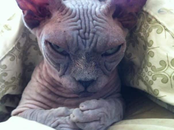 Кот маг