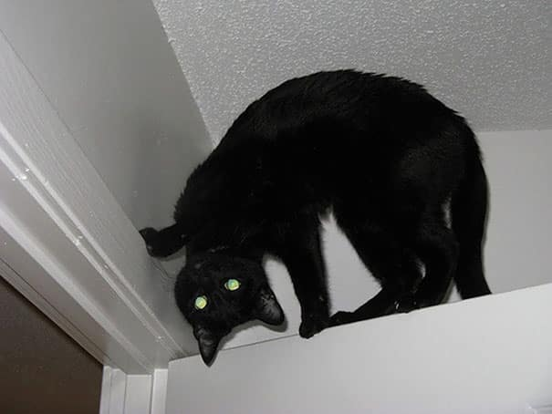 Кот демон