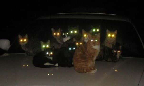 Бригада котов