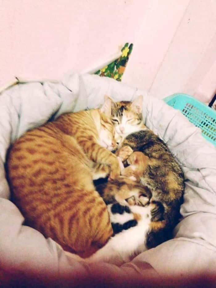 Счастливая семейная кошачья пара