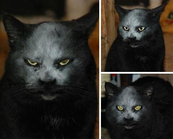 Зловещий кот