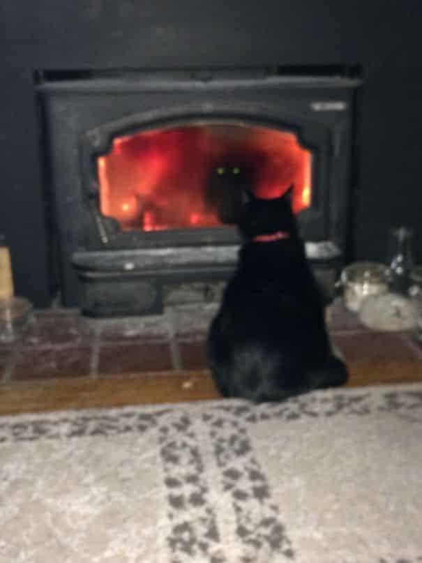 потусторонний кот