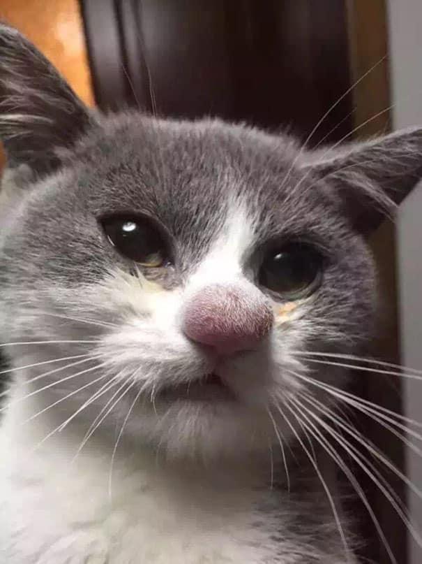 Ужаленная осой кошка