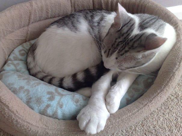 Лапка ужаленной кошки