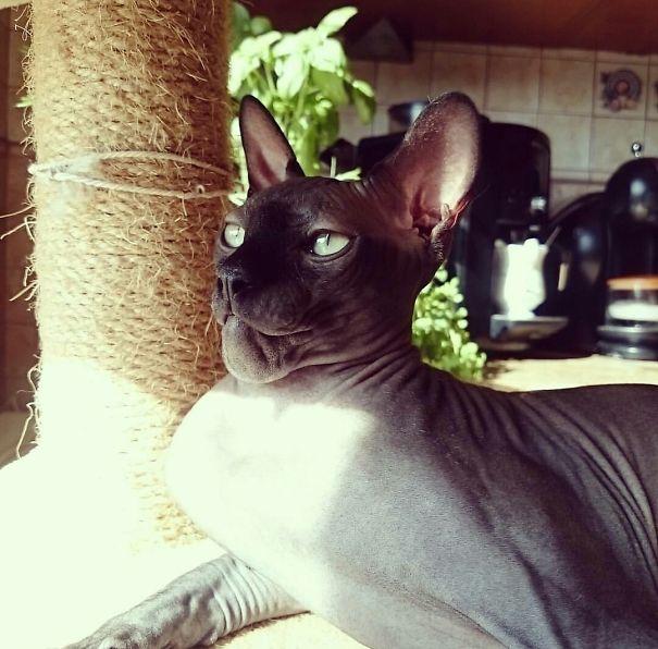 Морда ужаленной осой кошки