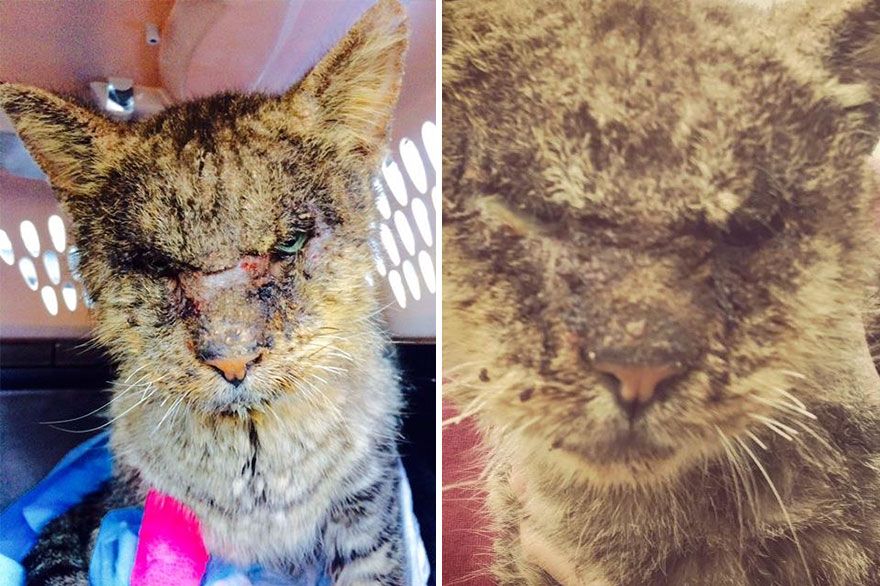 Ужасное состояние кошки