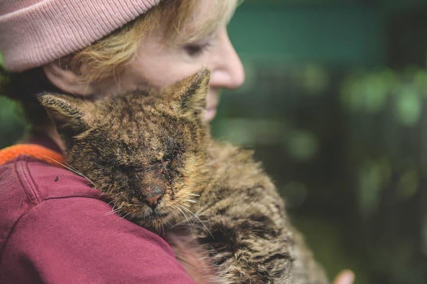 Спасительница кошки