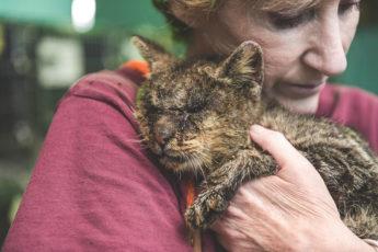 Спасенная кошка из приюта