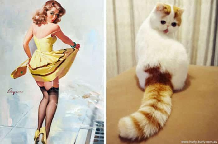 Кошка и женщина