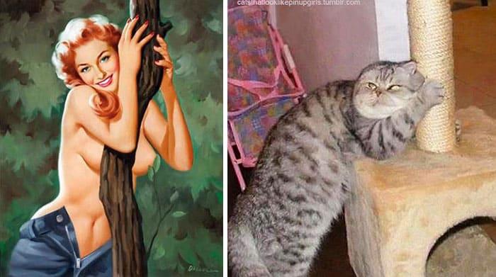 копирование кошками людей