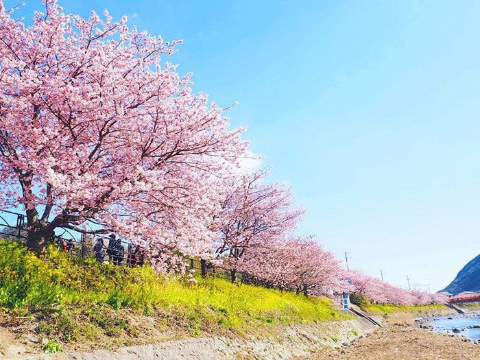 Весенняя Япония