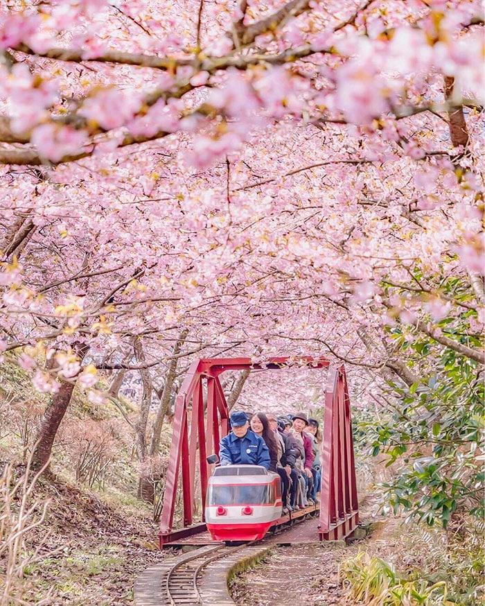 Путешествие по вишневому саду