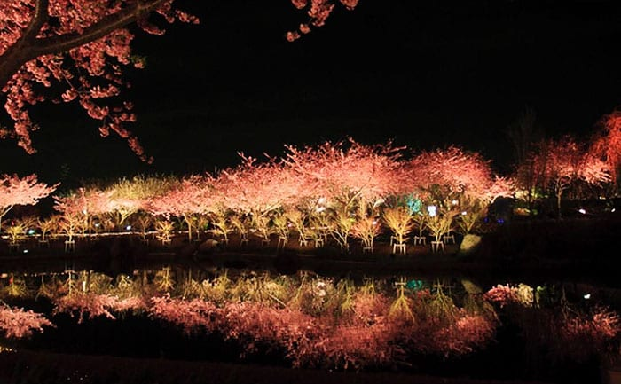Ночная подсветка вишни