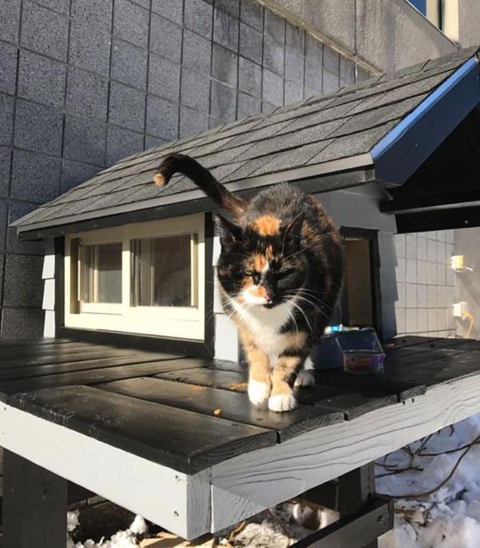 Кот домовладелец