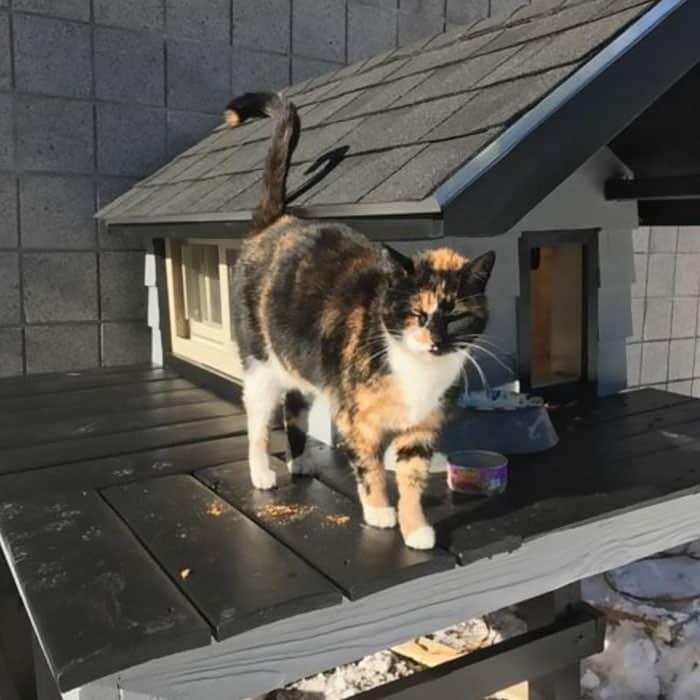 Кот в Бостоне