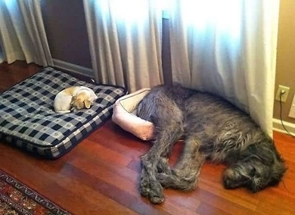 Собака знает свое место