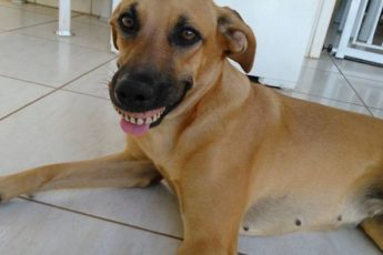 Собака с человеческими зубами