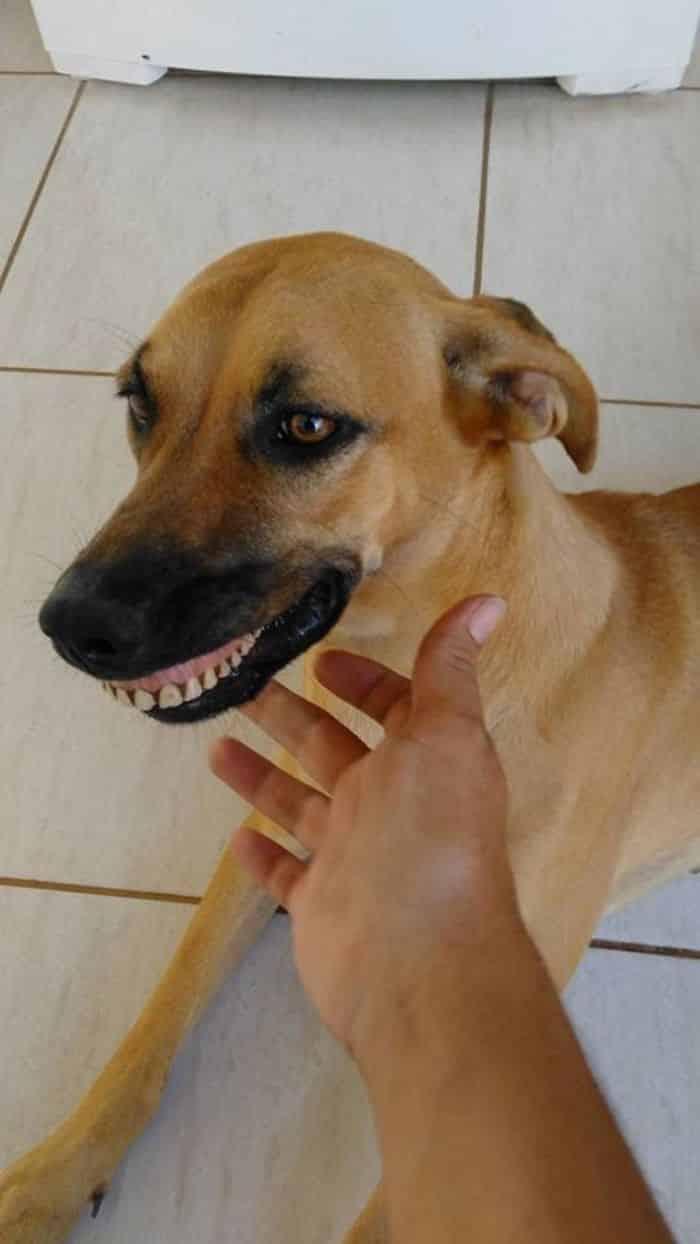Пес отрастил человеческие зубы
