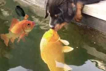 Родительский рыбий контроль