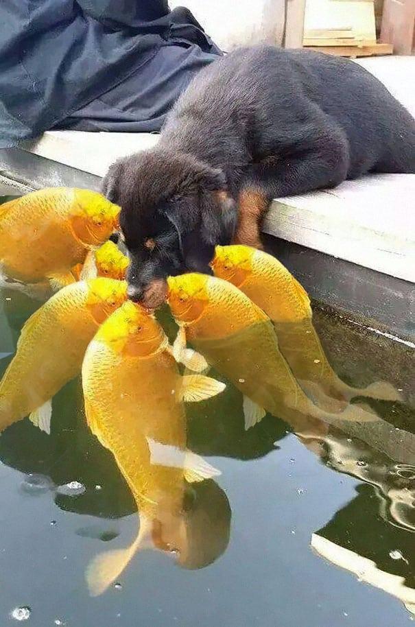 Рыбий гарем