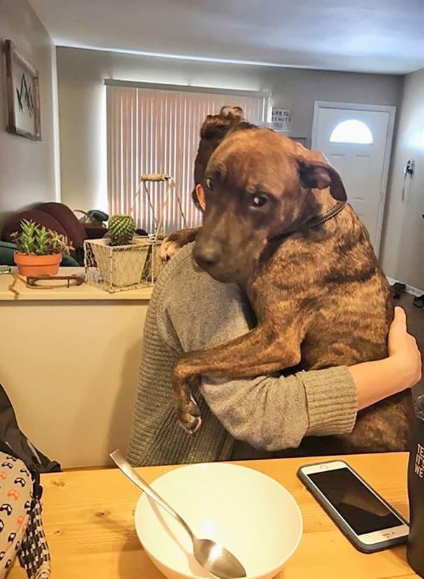 Благодарная собака