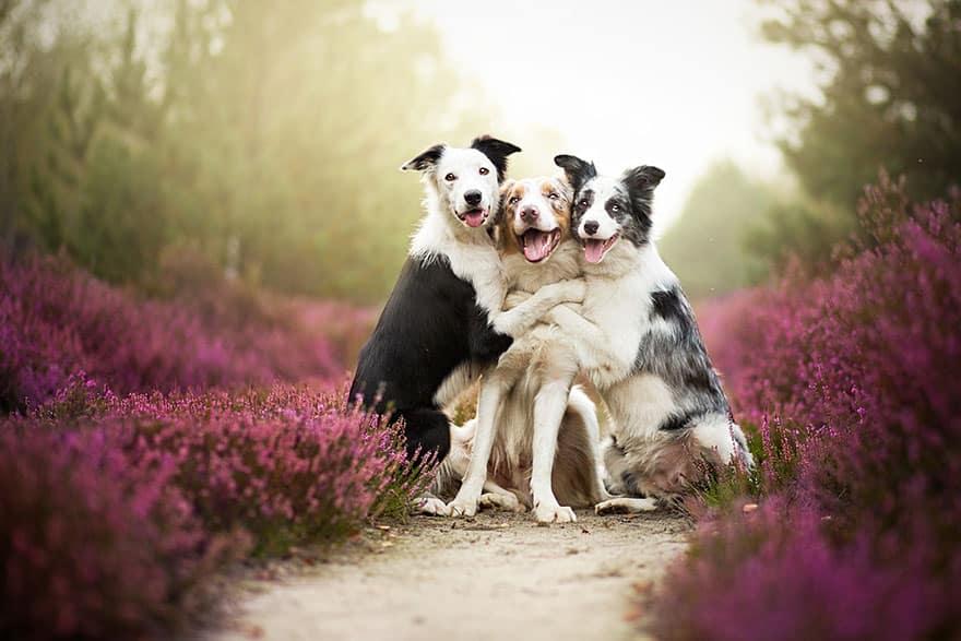 Три друга и фотограф