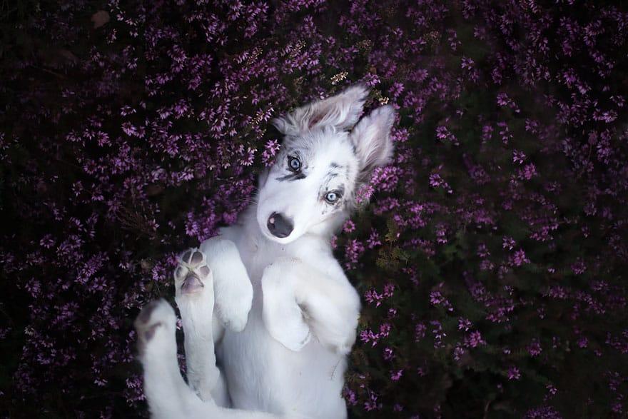 Фотография блаженной собаки