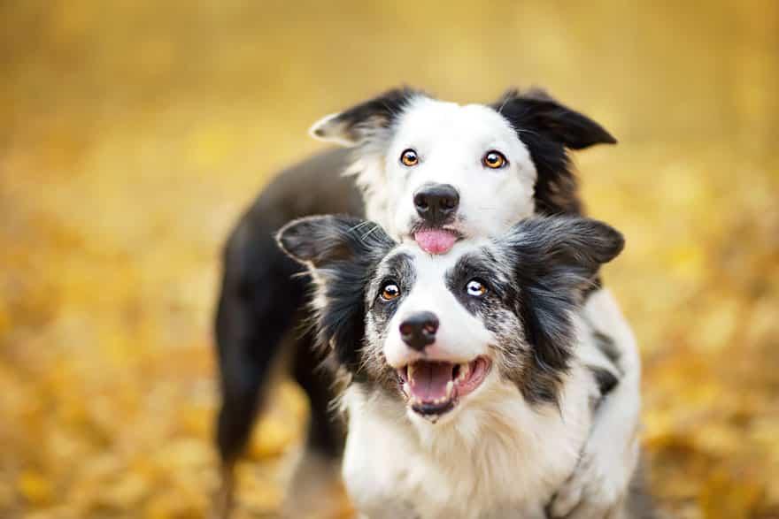 Фотография прикольных собак